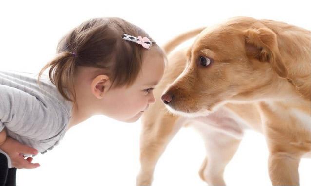 De 10 fantastische redenen van het hebben van een hond