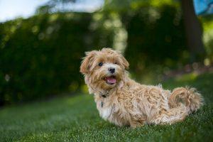 van een gezonde hond heeft u meer plezier