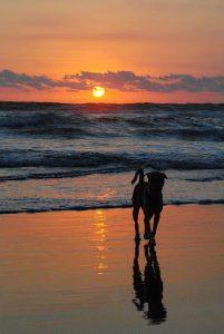 Let extra op je hond in de zomer