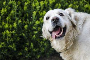 tanden van je hond gezond houden