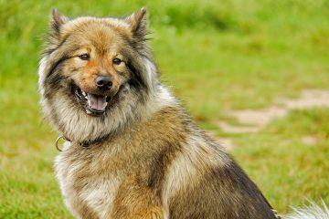 Voeding voor oudere honden