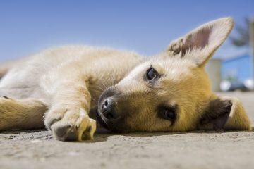 welke hond past het beste bij je? een puppy?